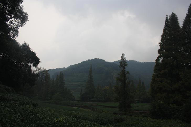 Tea Plantation near Hangzhou (China)